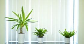 Grünpflanzen-Raumteiler: Die Pflanzenwand als Highlight im Büro