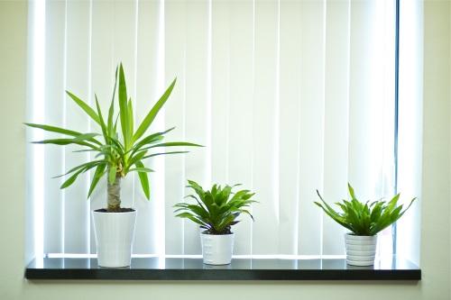 Pflanzen: Ein Hingucker fürs Büro