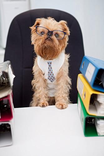 Hund im Büro – Sind Sie auf den Hund gekommen?